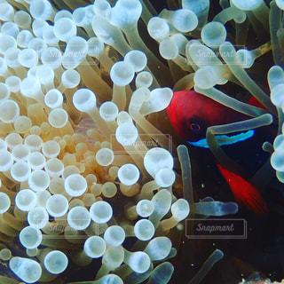 水の中の魚の群れの写真・画像素材[797253]