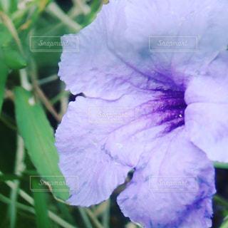 夏の花の写真・画像素材[797256]