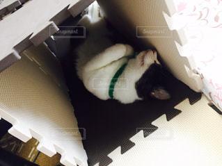 ボックスで眠っている猫 - No.727724