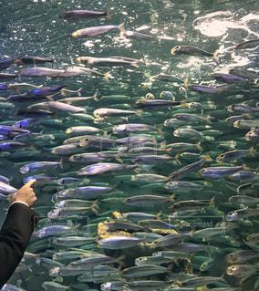 No.748241 魚