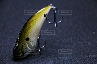 近くに魚のアップの写真・画像素材[956343]