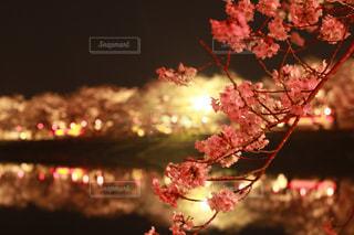 近くの花のアップ - No.1092196