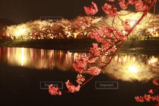 水の中から成長している花 - No.1092199