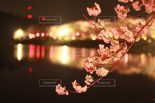 近くの花のアップの写真・画像素材[1092203]