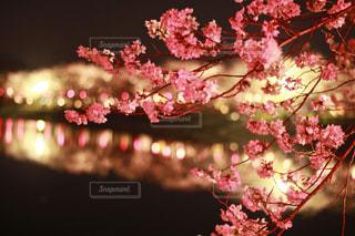 近くの花のアップの写真・画像素材[1092219]