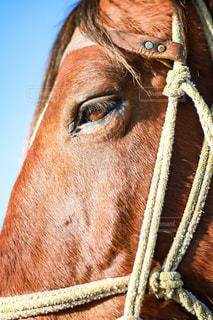 馬の写真・画像素材[1646045]