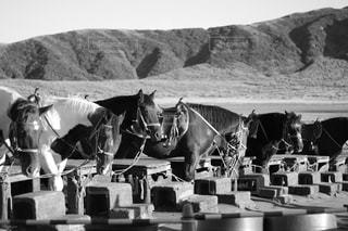 馬の写真・画像素材[1646046]