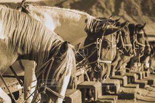 馬の写真・画像素材[1646047]