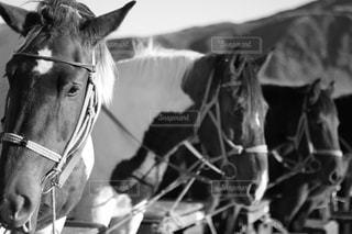 馬の写真・画像素材[1646048]