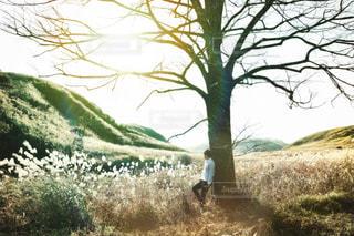 木の隣に立っている人の写真・画像素材[1646079]