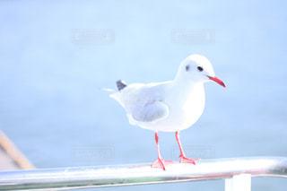 水の体の横に立っている大きな白い鳥の写真・画像素材[1747557]