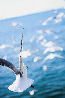 水の体の上を飛んでいる鳥の写真・画像素材[1747558]