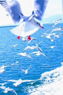 空中に凧の飛行の人々 のグループの写真・画像素材[1747561]