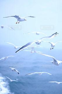 水の体の上を飛んでカモメの群れの写真・画像素材[1747562]