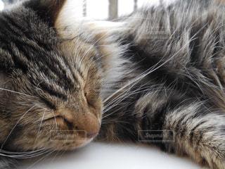 眠っている猫の写真・画像素材[761640]