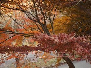 近くの木のアップの写真・画像素材[925218]