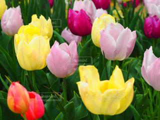 近くの花のアップの写真・画像素材[1118912]