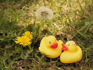 草の中の黄色い花の写真・画像素材[1118914]