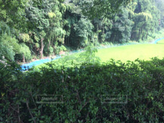 近くの緑豊かな緑の森の写真・画像素材[728924]