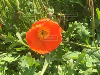 緑の葉と赤い花の写真・画像素材[728963]