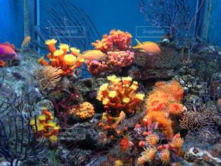 Aquariumの写真・画像素材[736909]