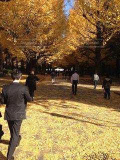東京大学の秋の写真・画像素材[805808]