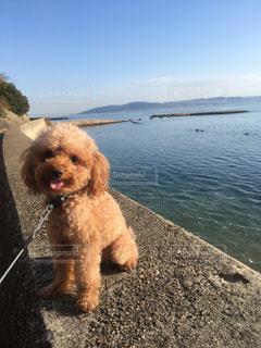 水の体の横に小さな犬の地位の写真・画像素材[729639]