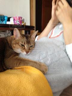 胎動を聴いている猫 - No.747690