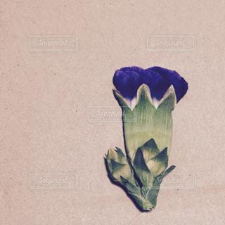 押し花の写真・画像素材[734189]