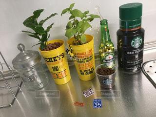 キッチンの観葉植物 - No.730521