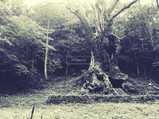 森林に佇む大樹の写真・画像素材[730592]