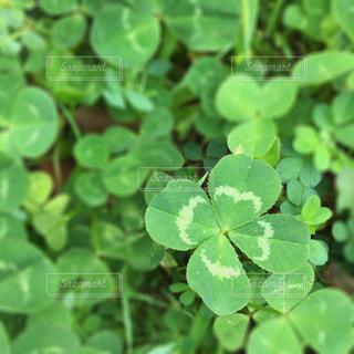 庭園の緑の植物の写真・画像素材[731544]
