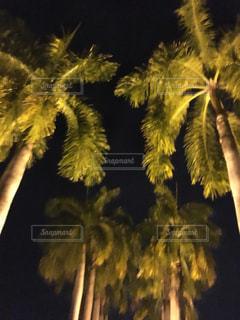 ツリーの横にあるヤシの木のグループの写真・画像素材[730946]