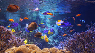サンゴ、水の写真・画像素材[731263]