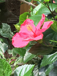 近くの植物のアップの写真・画像素材[731350]