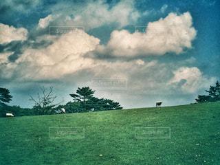 空の雲と大規模なグリーン フィールドの写真・画像素材[781086]