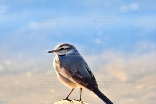 ビーチに立っている鳥の写真・画像素材[982584]