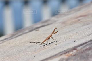 歩道に立っている昆虫の写真・画像素材[1036035]