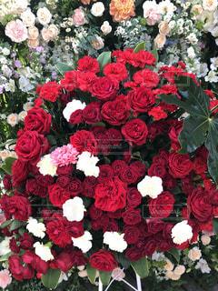 薔薇の写真・画像素材[1044139]