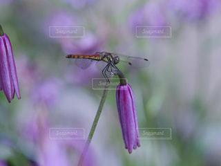 花に囲まれての写真・画像素材[2915625]