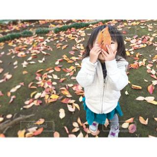 秋、見つけたの写真・画像素材[731482]
