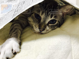ベッドの上で横になっている猫の写真・画像素材[731802]