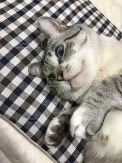 ベッドの上で横になっている猫の写真・画像素材[733217]