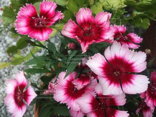 近くの植物にピンクの花のアップの写真・画像素材[747188]