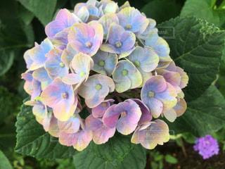 近くの花のアップの写真・画像素材[1236722]