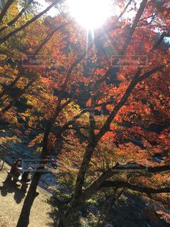美しい日本の風景の写真・画像素材[1614081]