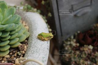 庭の植物の写真・画像素材[731874]