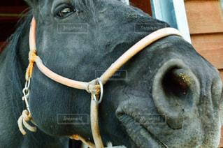 お馬さんの写真・画像素材[808758]