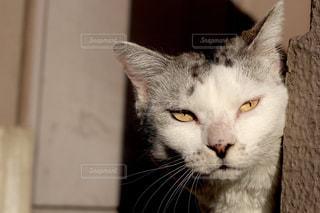 猫の写真・画像素材[514122]