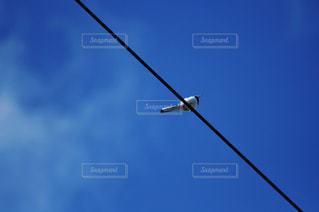 空の写真・画像素材[732807]